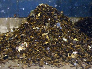 sort metals from compost waste